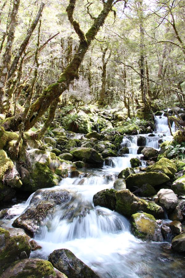Długa ujawnienie siklawa w lesie w Nowa Zelandia zdjęcie royalty free