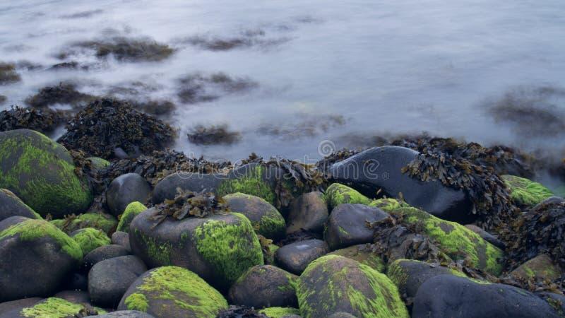 Długa ujawnienie woda Obok skał & gałęzatki zdjęcia royalty free