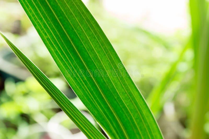 Długi i wąski Zielony liścia tło zdjęcie stock