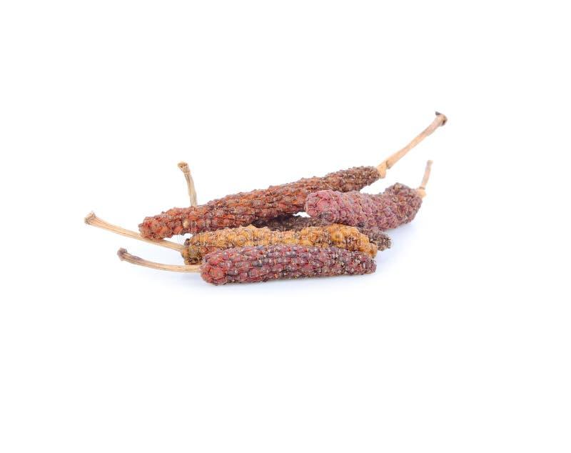Długi pieprz, genus dudziarz zdjęcia stock