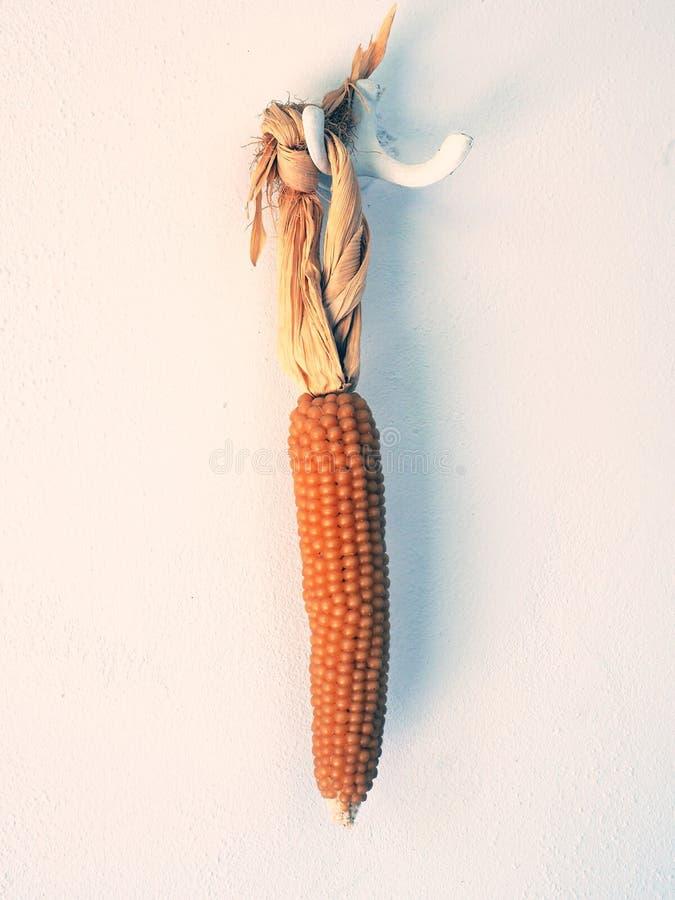 Długi Suchy Kukurydzanego Cob obwieszenie na biel ścianie zdjęcia stock