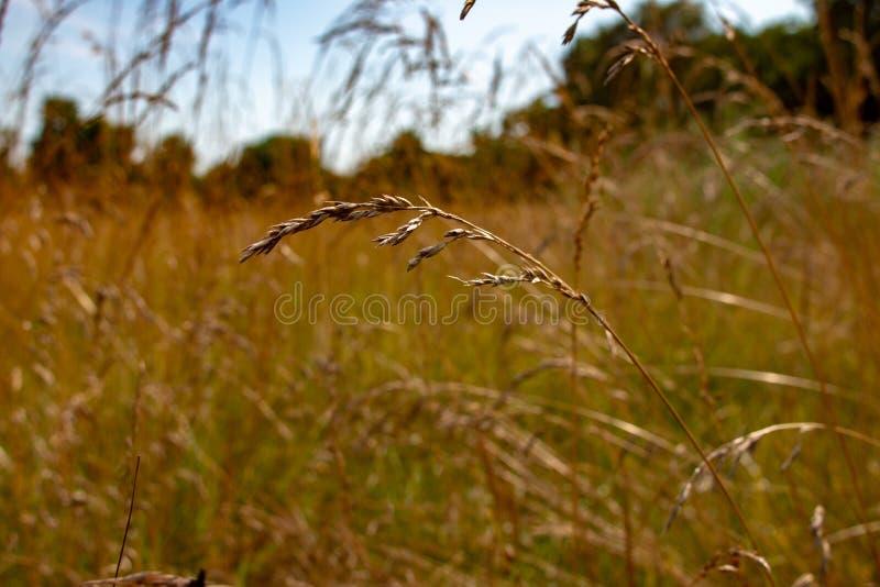 Długi trawa krajobrazu typ fotografia Pok?j dla kopii przestrzeni Fotografia pokazuje piękno Ontario natura zdjęcia royalty free