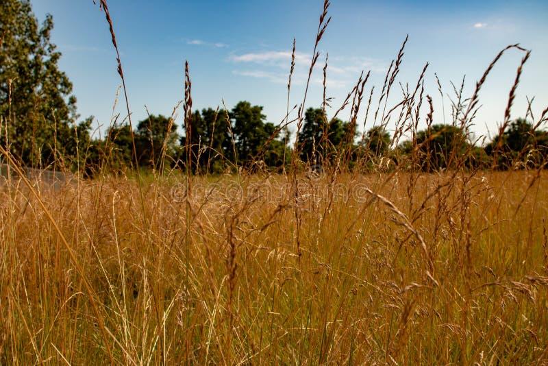 Długi trawa krajobrazu typ fotografia Pok?j dla kopii przestrzeni Fotografia pokazuje piękno Ontario natura fotografia royalty free