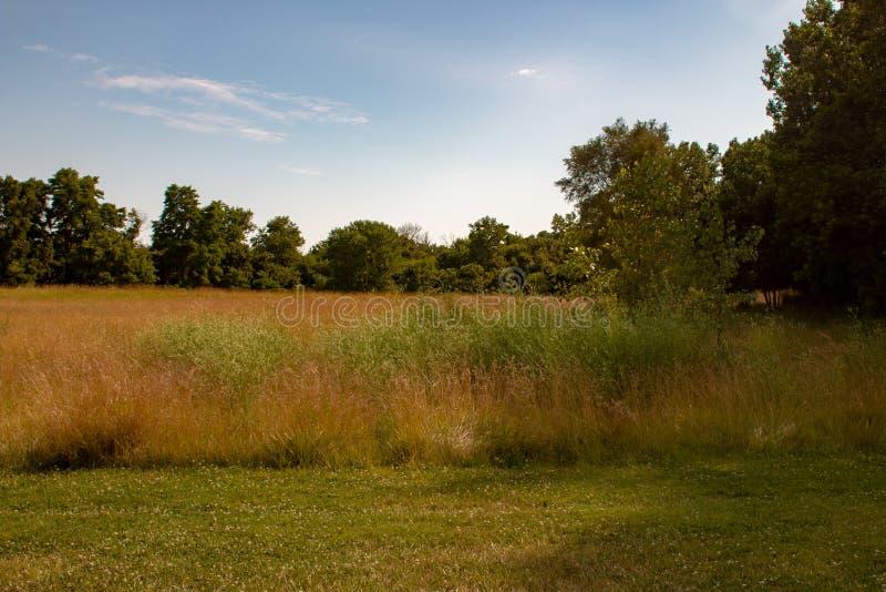 Długi trawa krajobrazu typ fotografia Pok?j dla kopii przestrzeni Fotografia pokazuje piękno Ontario natura zdjęcia stock