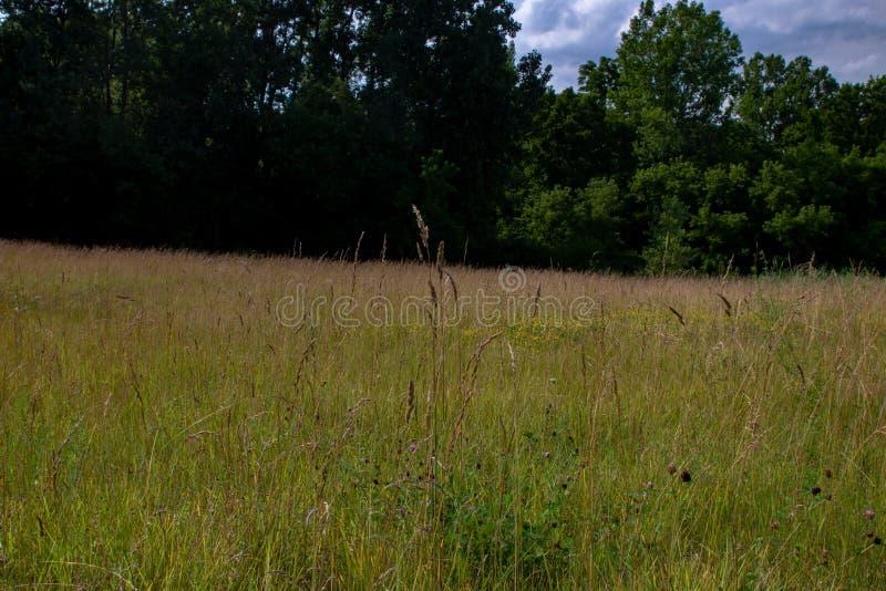 Długi trawy łąki krajobraz z różnorodnymi gatunkami wildflower w Ontario obrazy stock