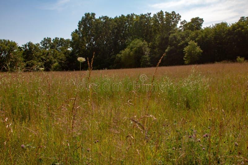 Długi trawy łąki krajobraz z różnorodnymi gatunkami wildflower w Ontario zdjęcia royalty free