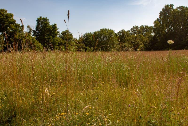 Długi trawy łąki krajobraz z różnorodnymi gatunkami wildflower w Ontario zdjęcie stock