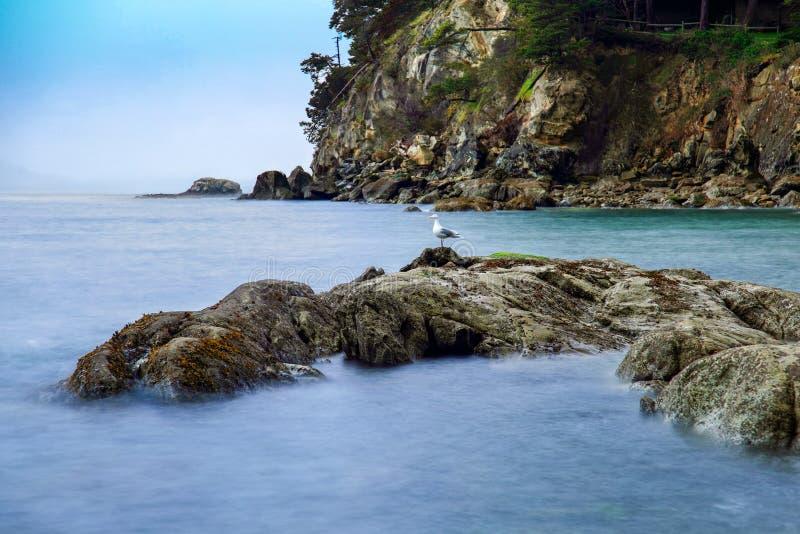 Długi ujawnienie Larrabee zatoka z seagull na skałach w Bellingham, WA obrazy stock