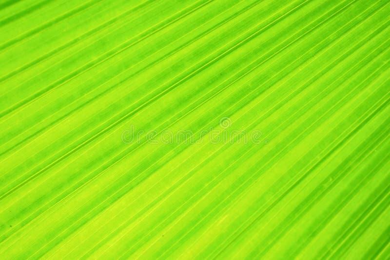 Długi ujawnienie skutek zielony fan palmowy liść na zamazanym ruchu, abstrakt greenery backgroun zdjęcia stock