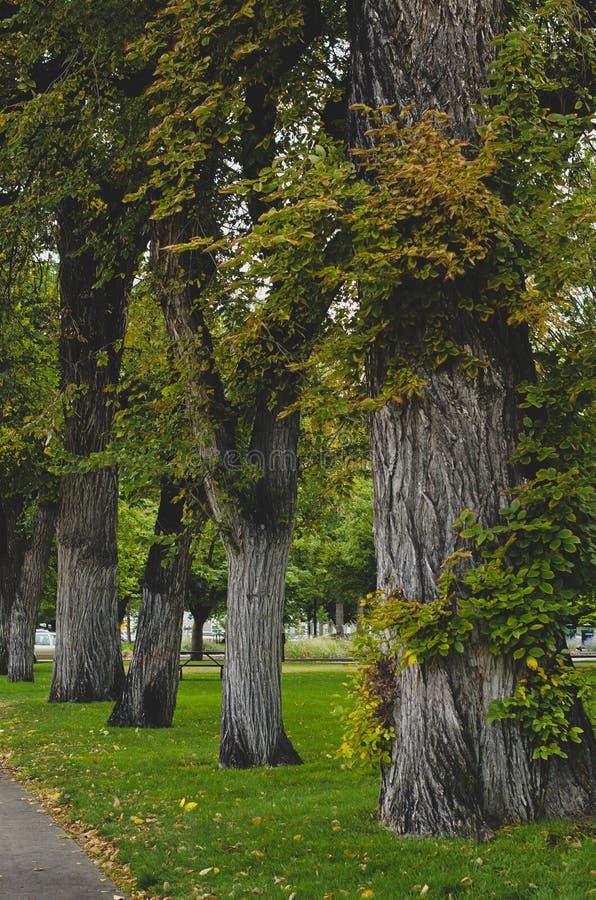 Długi widok rząd porosli drzewa obrazy royalty free
