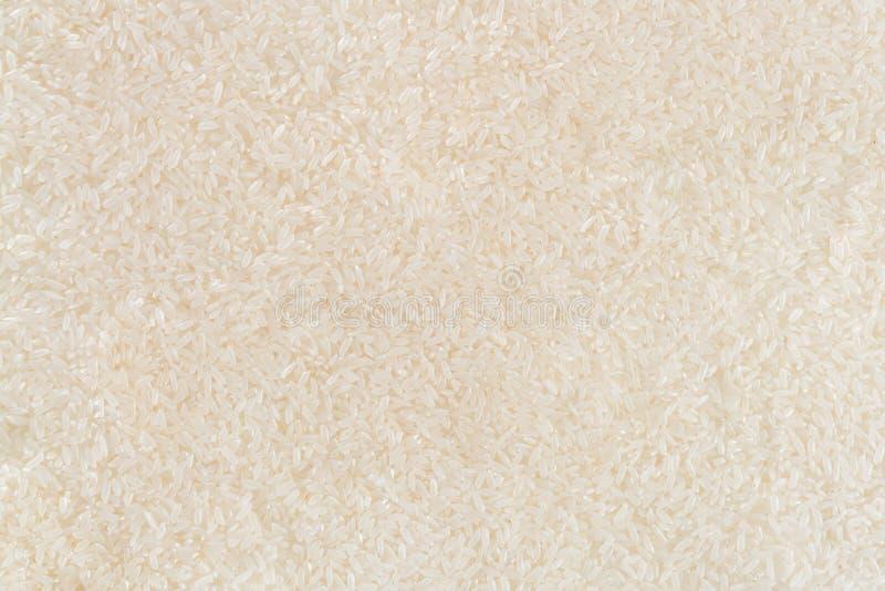 Długich zbożowych ryż tła obrazek fotografia royalty free