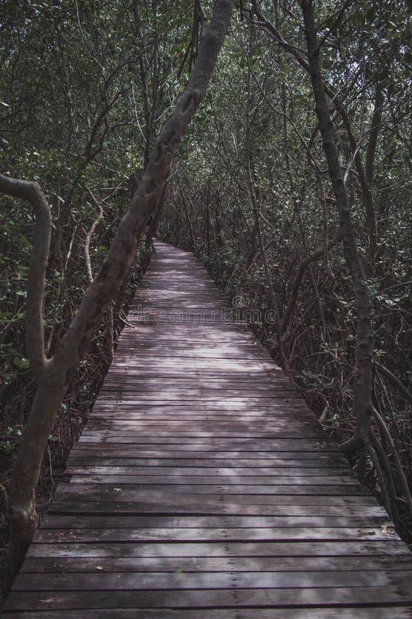 Długie drewniane przejście mostowe do lasu obraz stock