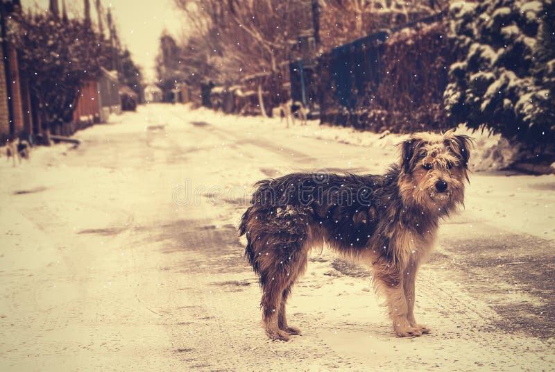 Długie włosy pies pod spada śnieżną pozycją na zimy pustej ulicie, rocznika styl obraz stock
