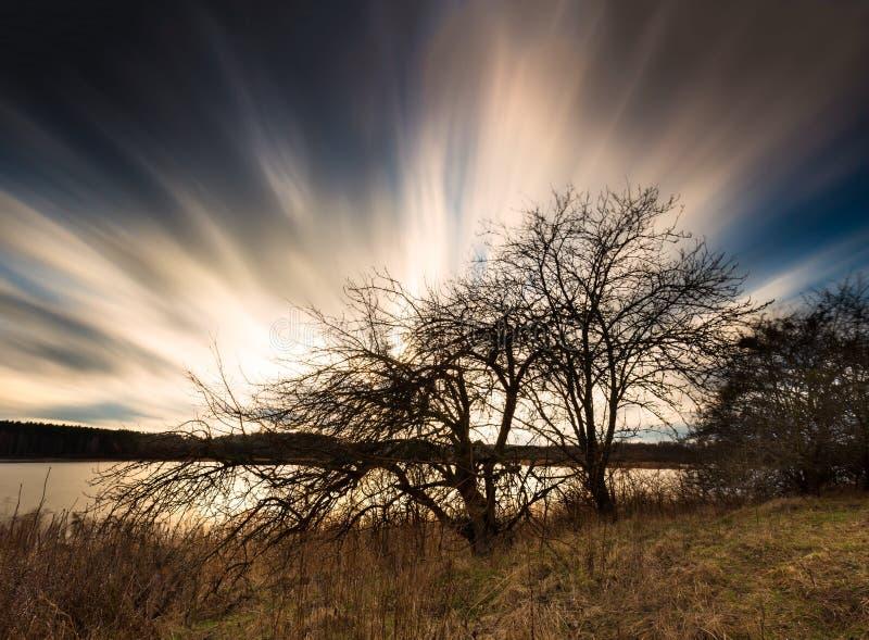 Długiego ujawnienia czarny i biały krajobraz chodzenie chmurnieje nad więdnącym drzewem zdjęcie stock