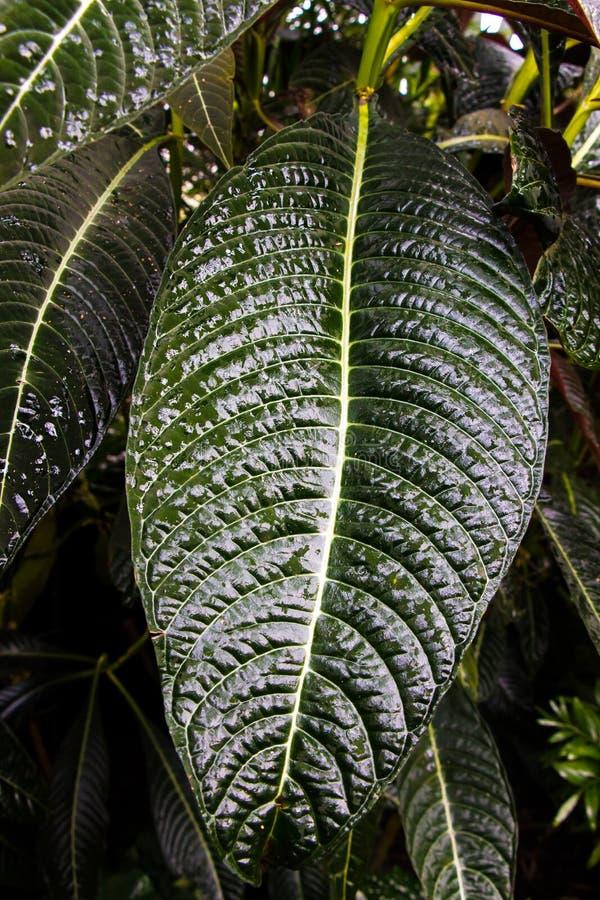 długiej zieleni liść fotografia royalty free