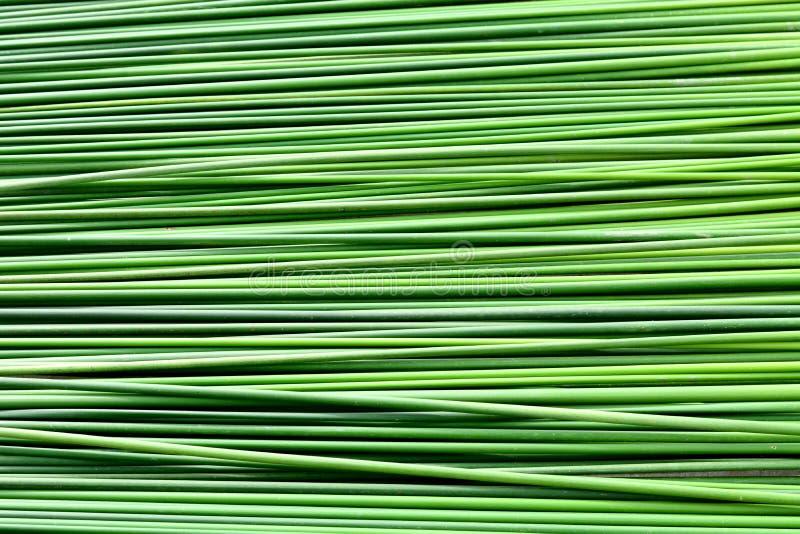 Długiej zieleni liścia tekstury papirusowy tło zdjęcia stock