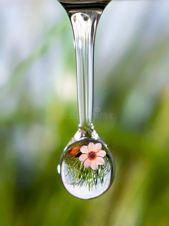 Dźwięk natura - kropla czysta woda z odbiciem halny kwiat obrazy stock