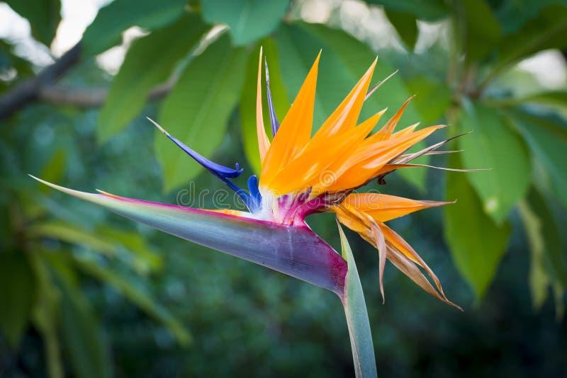 Dźwigowa kwiat roślina obrazy stock