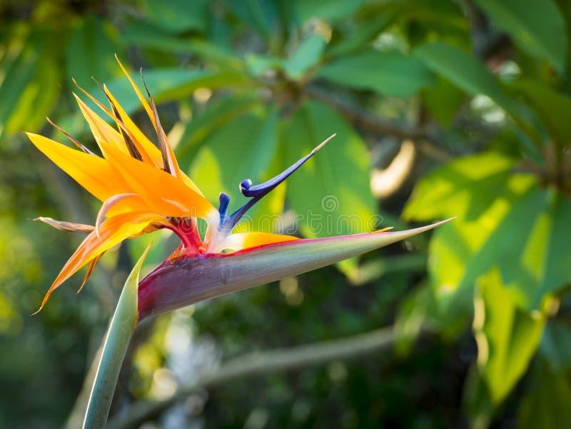 Dźwigowa kwiat roślina fotografia royalty free