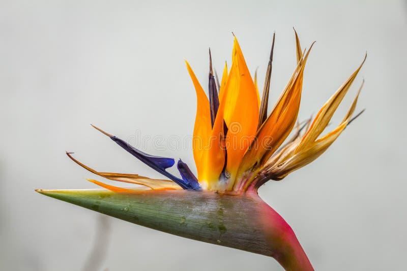 Dźwigowy kwiat zdjęcie stock