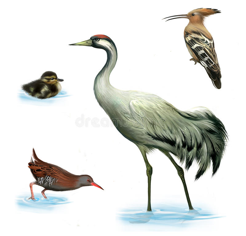 Dźwigowy ptak, kaczątko, woda poręcz ilustracja wektor