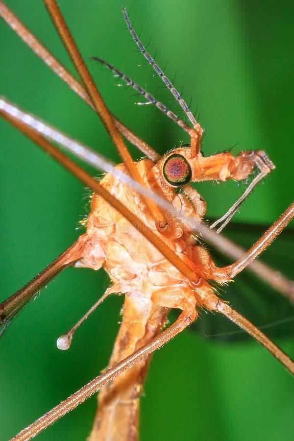 dźwigowy zamknięta dźwigowa komarnica zdjęcia royalty free