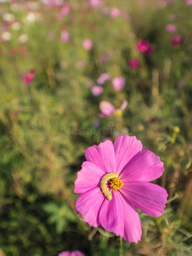 Dżdżownica na kosmosu kwiacie zdjęcie royalty free