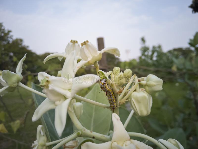 Dżdżownicy łasowania liście i korona kwiaty zdjęcie stock