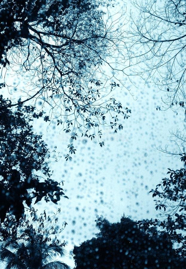 dżdżyści drzewa nadokienni dni zdjęcie stock