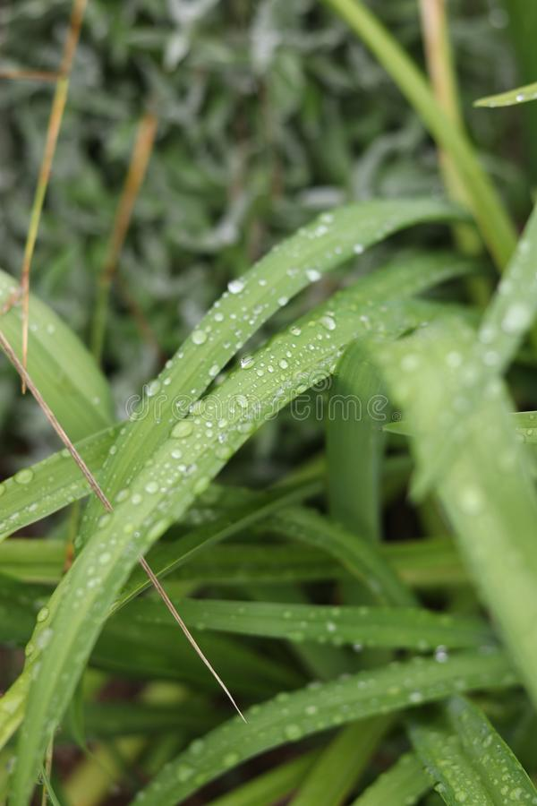 Dżdżysta pogoda w Sistani obrazy royalty free