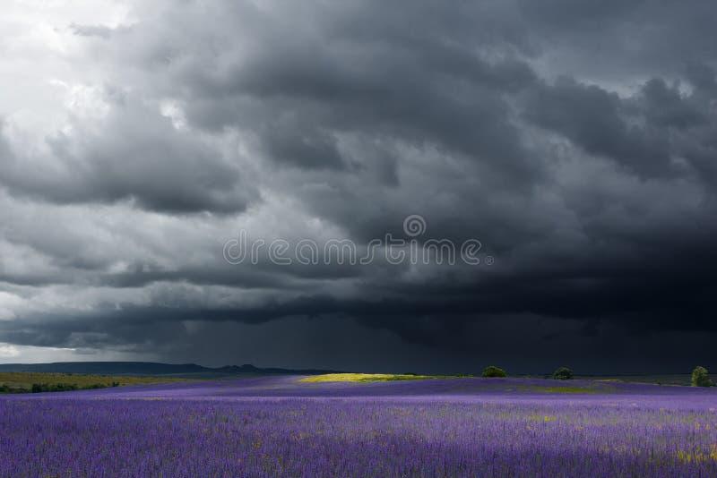 Dżdżyste dramatyczne chmury nad pięknym purpury polem zdjęcie royalty free