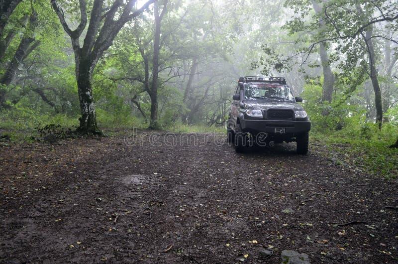Dżip w mglistym lesie obraz stock