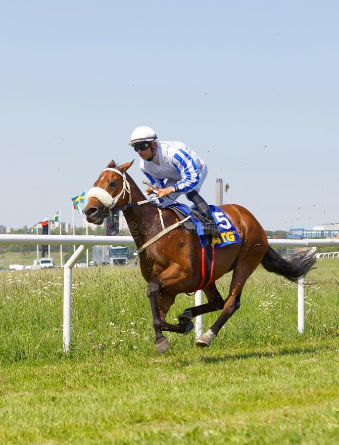 Dżokej jedzie arabskiego cwału biegowego konia przy biegowym śladem obrazy stock