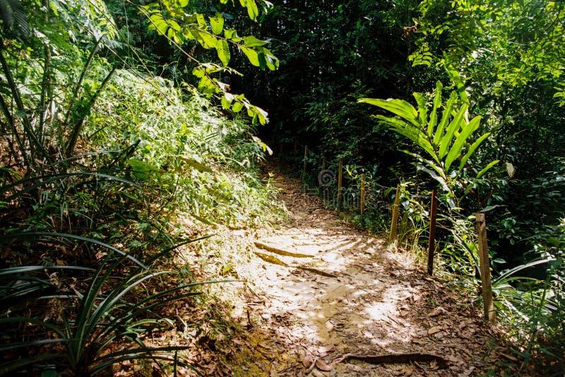 Dżungla ślad zdjęcia stock