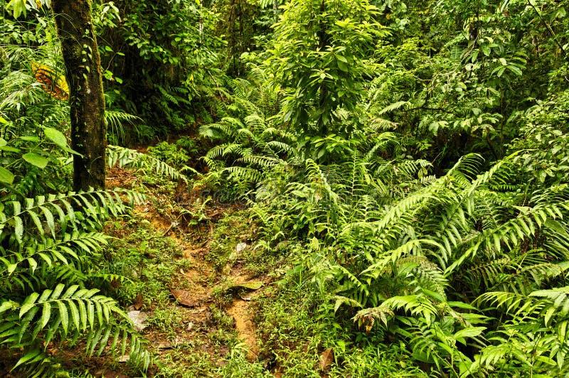 Dżungla ślad, Costa Rica fotografia stock