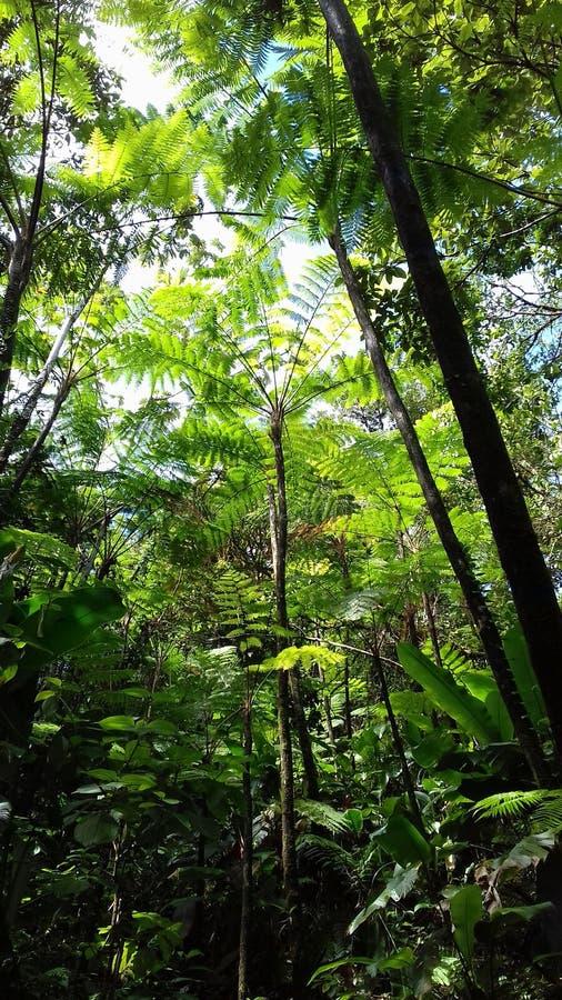 Dżungla zdjęcie royalty free