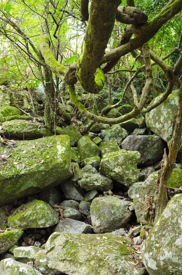 Dżungla fotografia stock