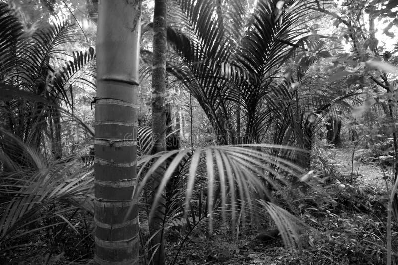 Dżungla zdjęcia royalty free