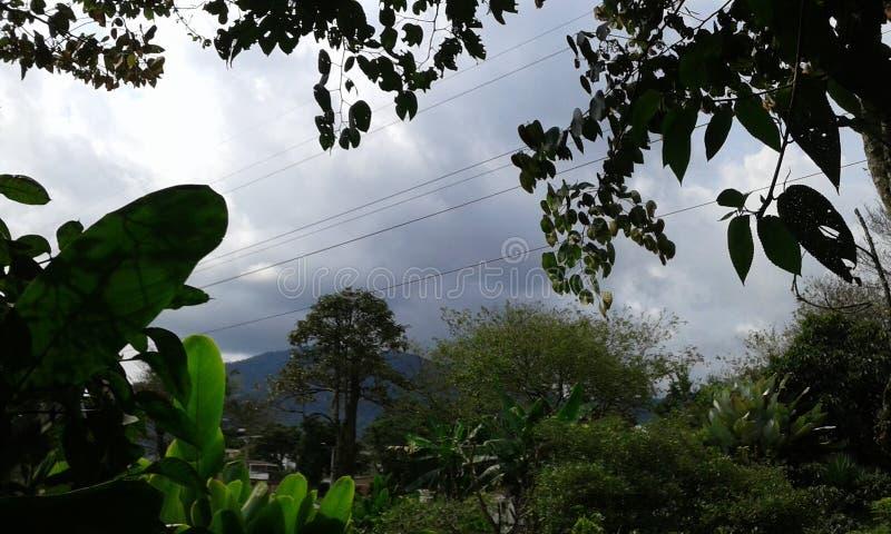 dżungla colombia miłe miejsce dla projektu paeadise zdjęcie royalty free