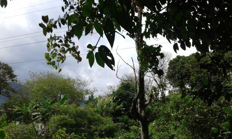 dżungla colombia miłe miejsce dla projektu paeadise obraz stock