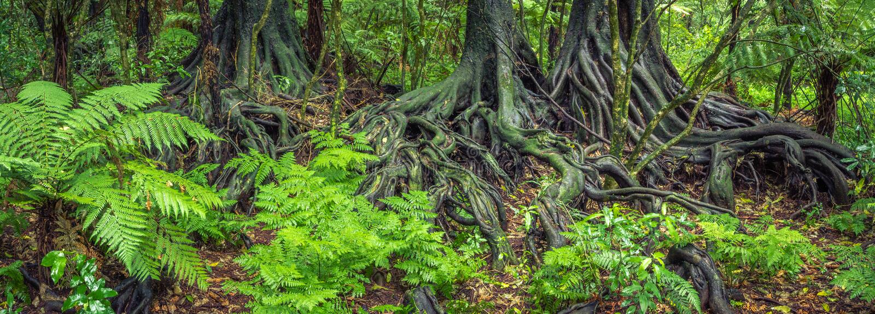 Dżungla korzenie fotografia stock