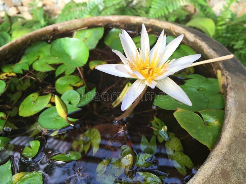 Dżungla kwiat zdjęcia royalty free