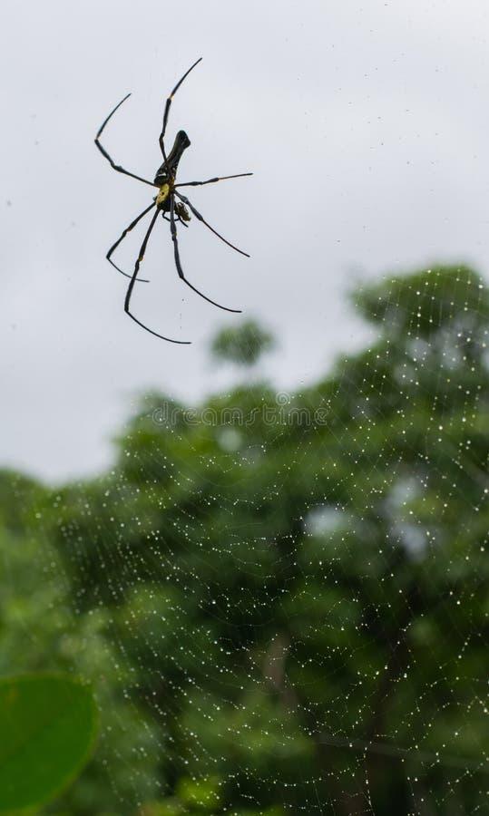 Dżungla pająk zdjęcie stock