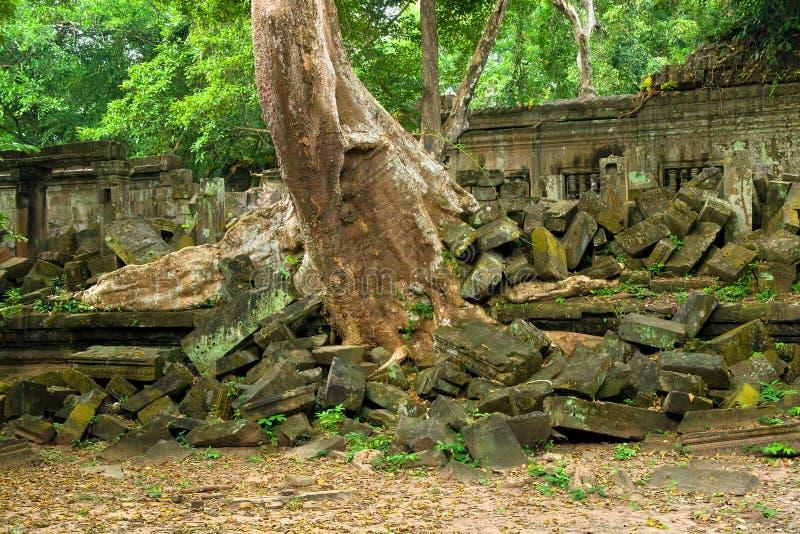 dżungla rujnuje sceniczną świątynię obrazy royalty free