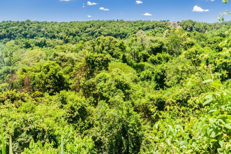 Dżungla w Iguazu parku narodowym fotografia royalty free