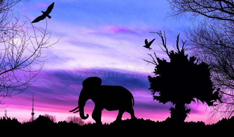 Dżungla z starym drzewem, ptakami i słoniem na purpurowym chmurnym zmierzchu, obrazy stock