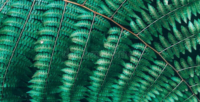 Dżungla zasadza tło liści tropikalnego wzór Tropikalni gąszcze i krzaki w dżungli fotografia royalty free