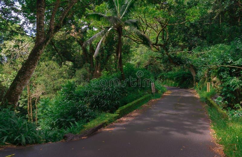 Dżungli droga fotografia royalty free