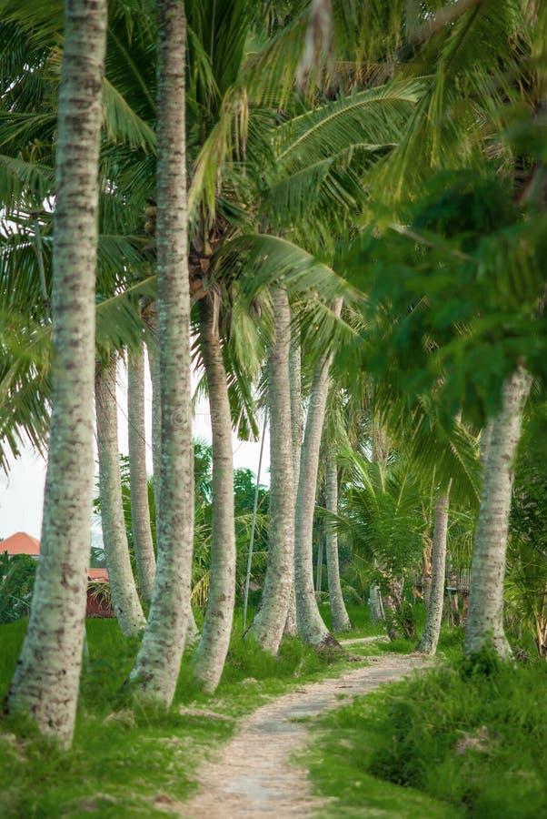 Dżungli droga przez palmowego lasu na tropikalnej wyspie zdjęcia royalty free