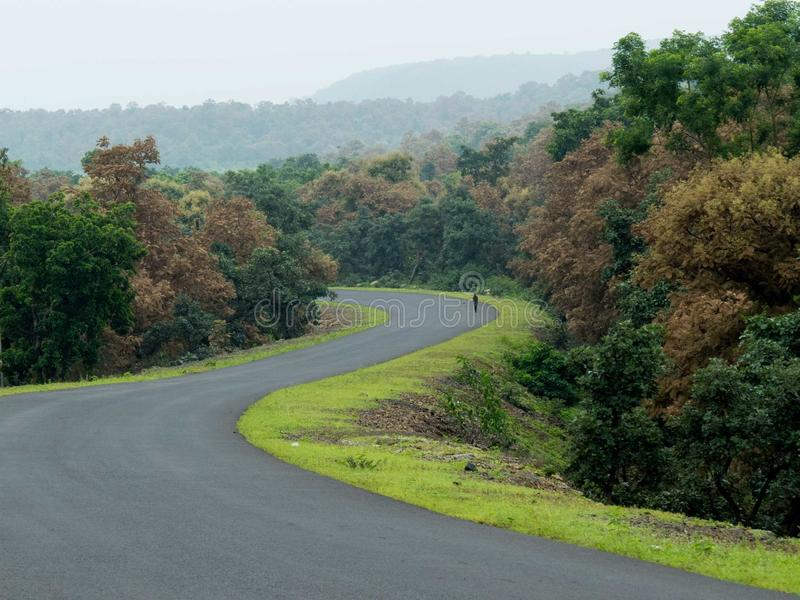 Dżungli Forest Green krajobrazu Drogowa ścieżka z pieszy zdjęcia royalty free